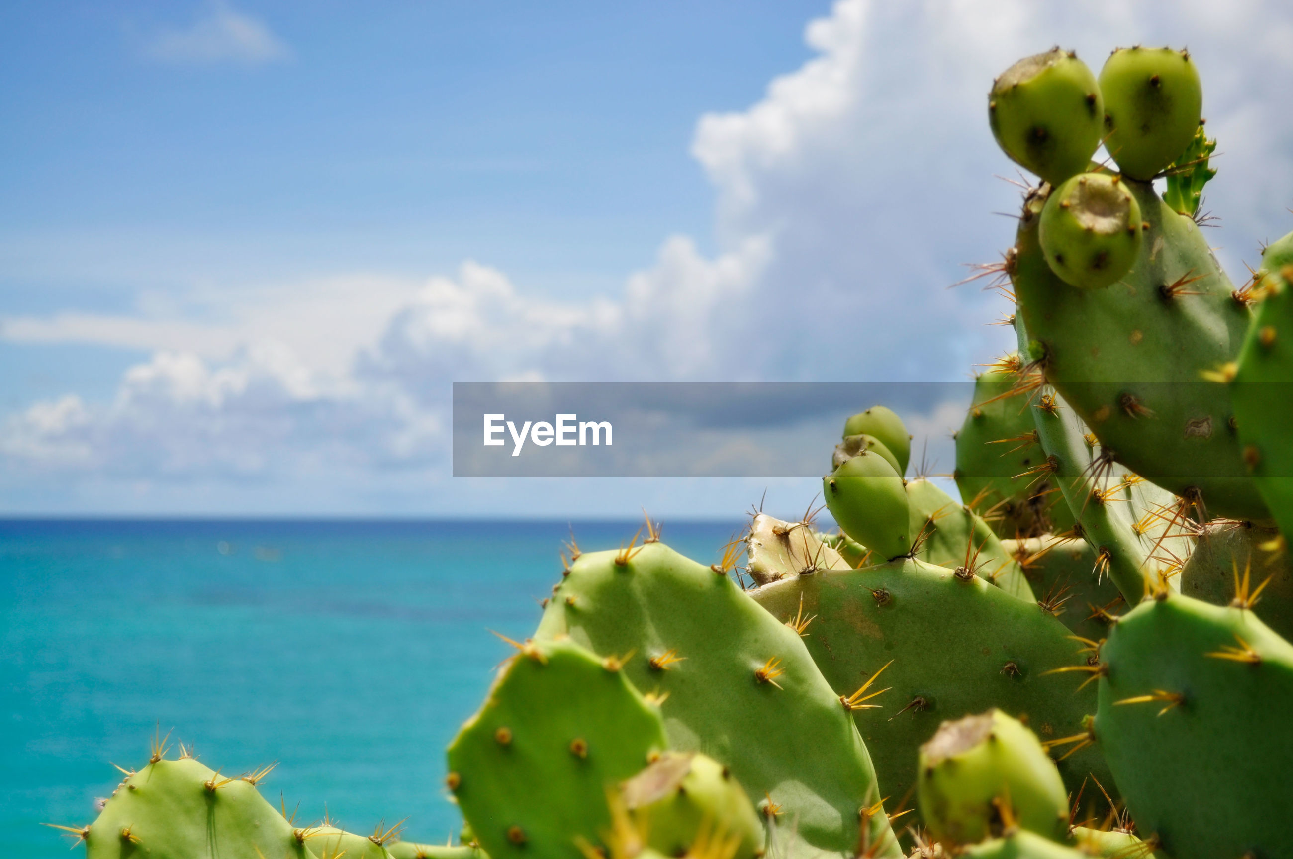 Close-up of cactus plant against cloudy sky
