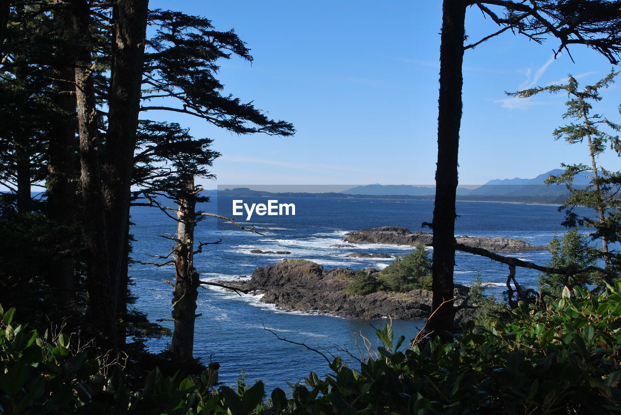 View Of Rocky Coastline From Forest