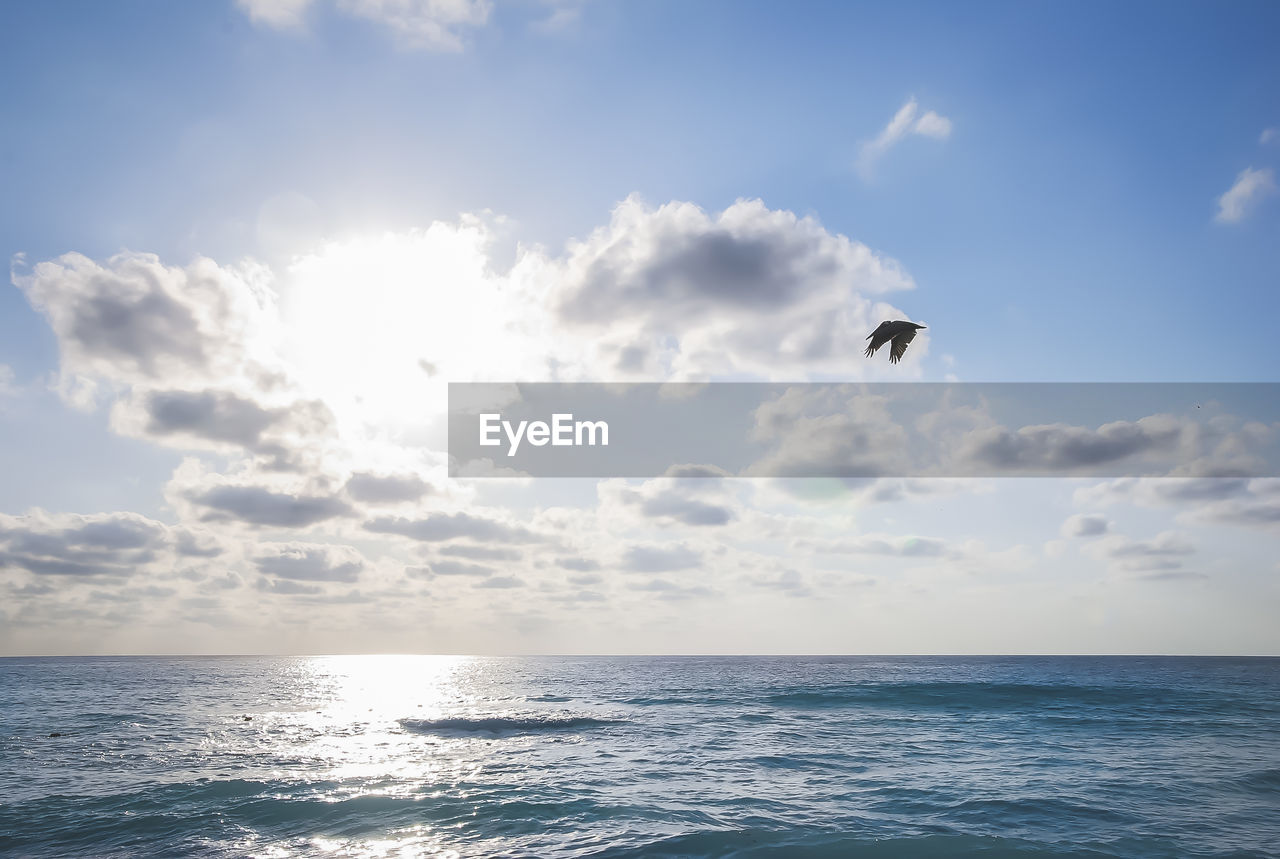 sky, sea, animal themes, animal, horizon over water, water, one animal, horizon, animals in the wild, vertebrate, bird, animal wildlife, flying, beauty in nature, scenics - nature, cloud - sky, waterfront, nature, mid-air, no people, outdoors, seagull