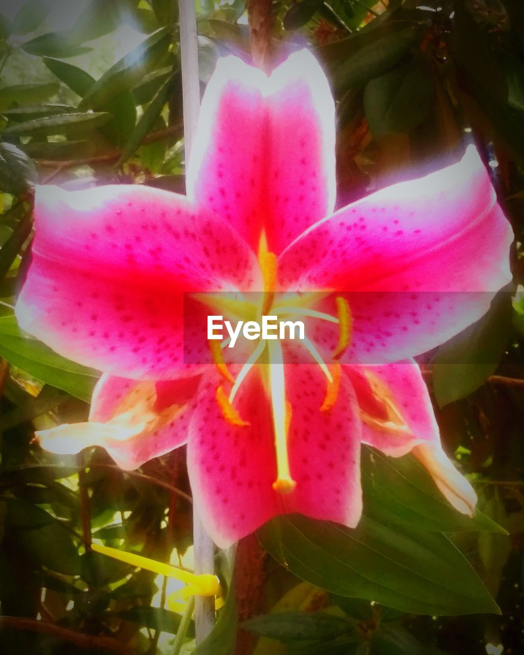 flower, petal, beauty in nature, growth, fragility, nature, pink color, flower head, freshness, close-up, no people, plant, day, outdoors, blooming