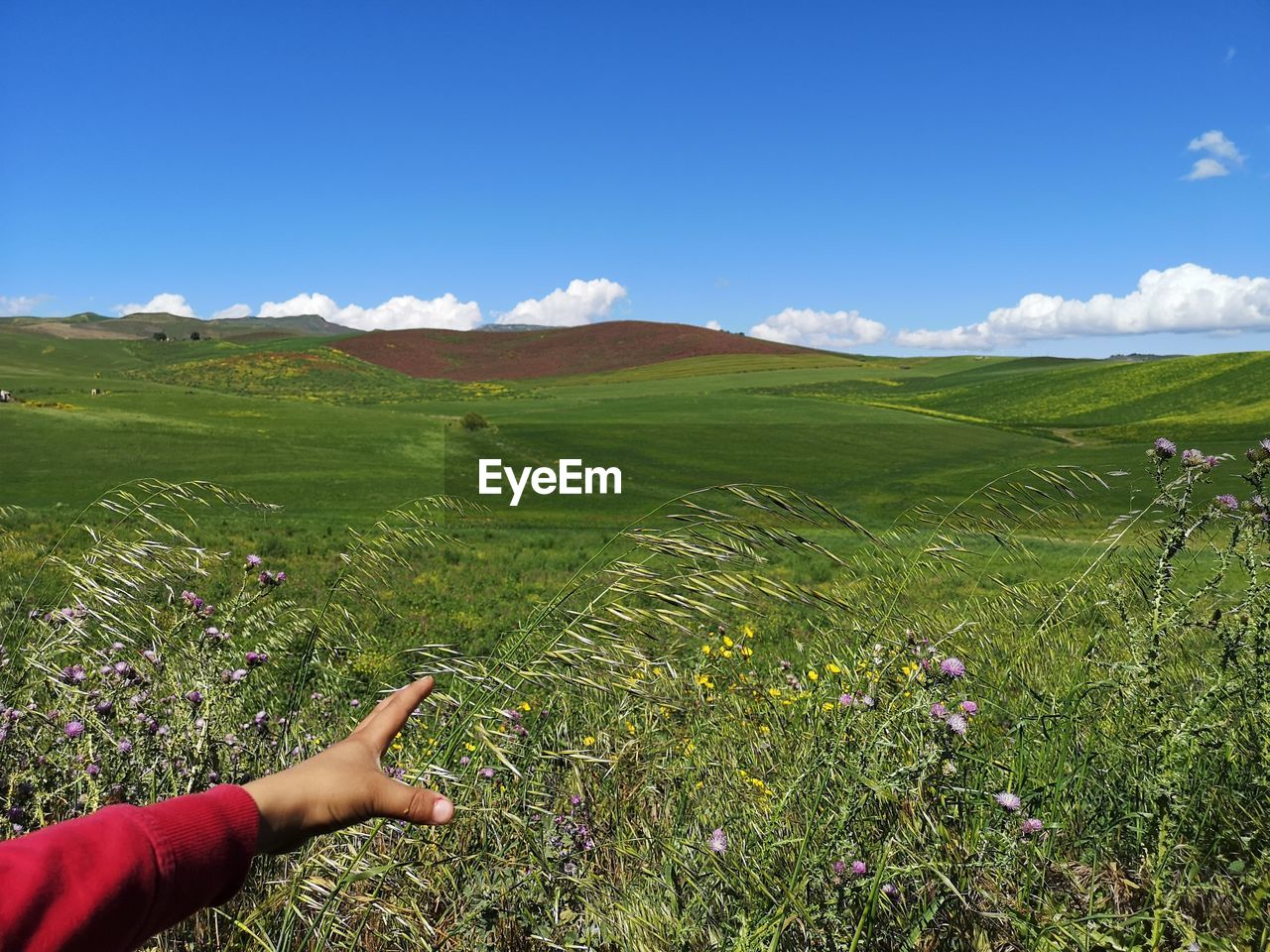 plant, field, land, sky, landscape, beauty in nature, environment, growth, one person, hand, real people, nature, green color, human hand, day, leisure activity, scenics - nature, human body part, tranquil scene, rural scene, outdoors, body part, finger