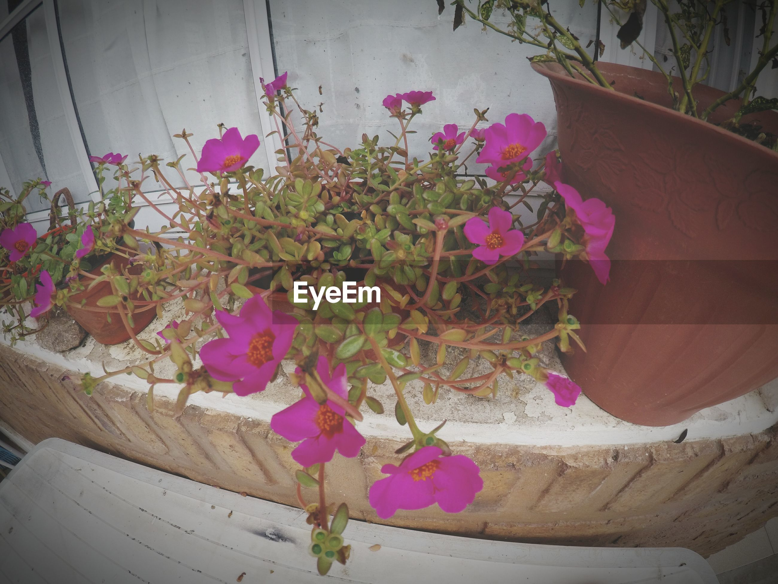 flower, plant, fragility, growth, nature, pink color, petal, beauty in nature, no people, day, outdoors, bougainvillea, freshness, close-up