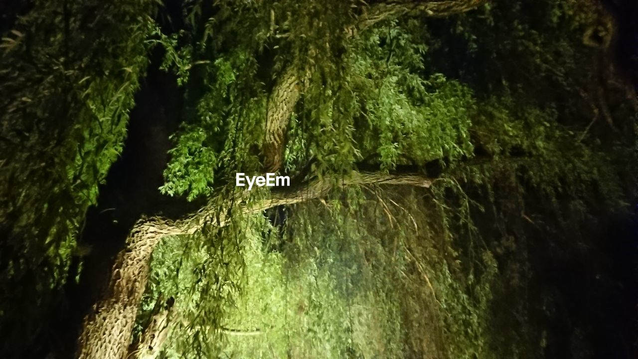 plant, growth, tree, tree trunk, green color, trunk, moss, no people, nature, close-up, beauty in nature, selective focus, day, outdoors, textured, tranquility, land, focus on foreground, forest, bark, lichen