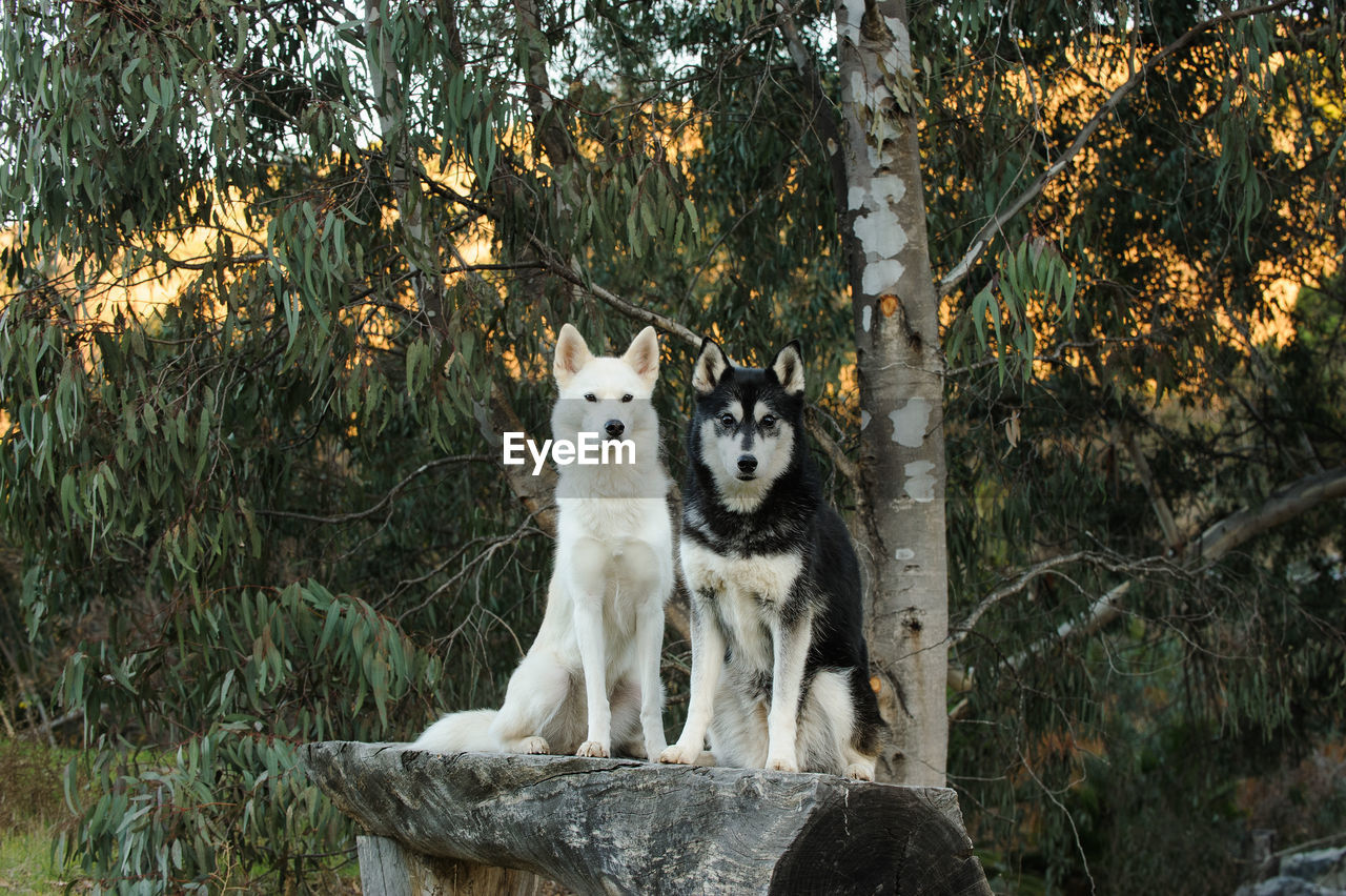 Portrait Of Dogs On Bench Against Trees