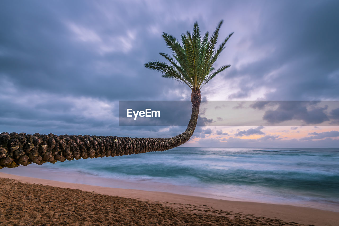 sky, cloud - sky, beach, sea, water, scenics - nature, land, beauty in nature, tropical climate, horizon over water, tree, palm tree, tranquil scene, tranquility, nature, horizon, plant, sand, sunset, no people, outdoors, coconut palm tree