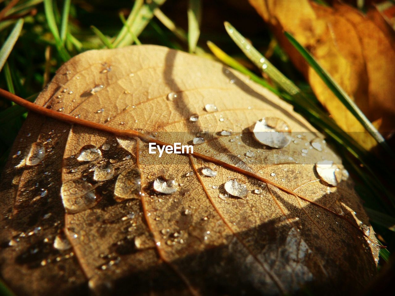 Close-up of wet leaf on field during monsoon