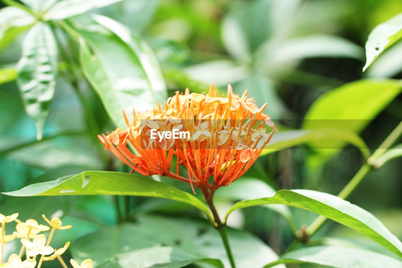 flowering plant, plant, flower, growth, freshness, beauty in nature, vulnerability, fragility, petal, flower head, close-up, inflorescence, nature, plant part, green color, leaf, orange color, day, no people, pollen, outdoors