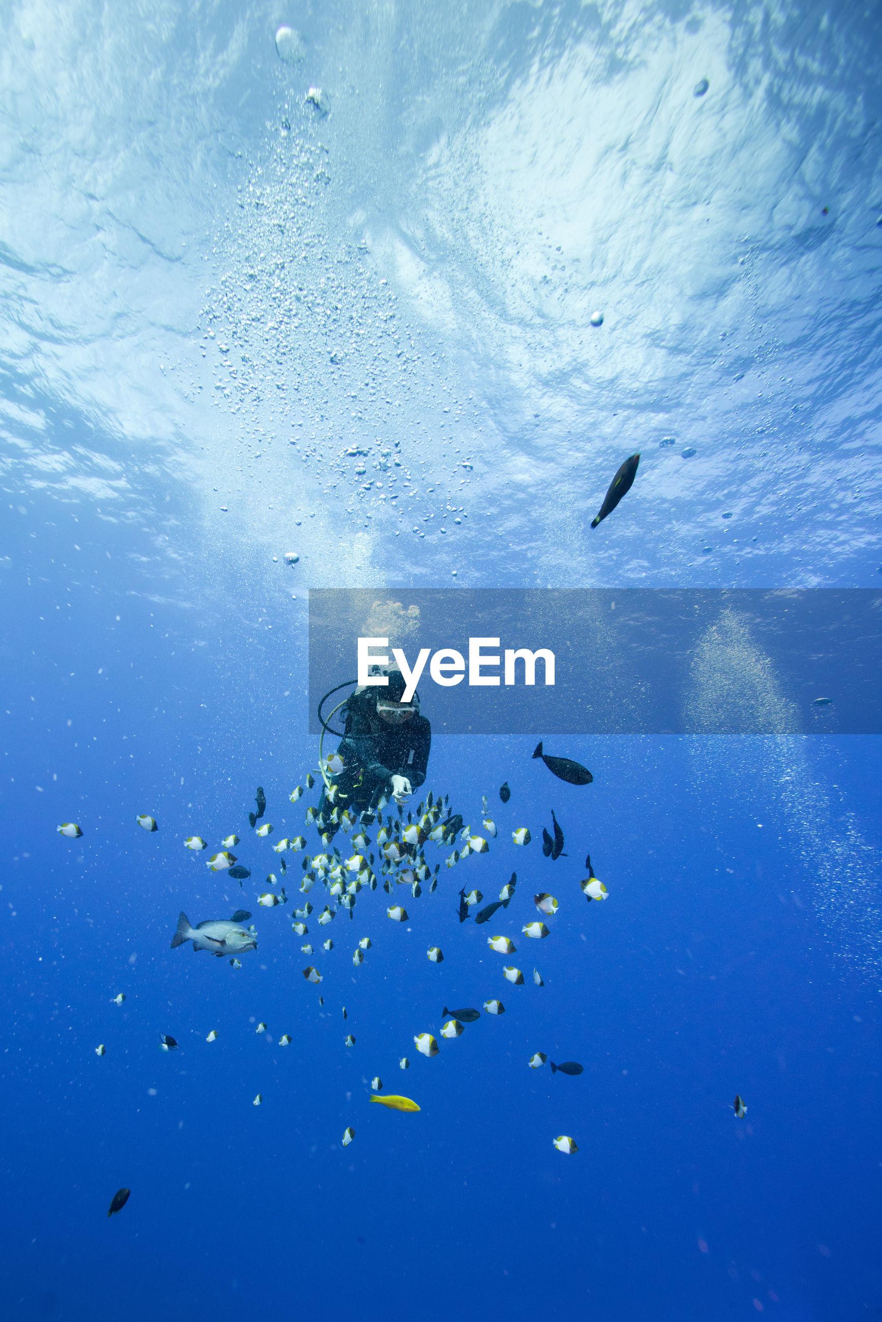Scuba diver swimming amidst fish in sea