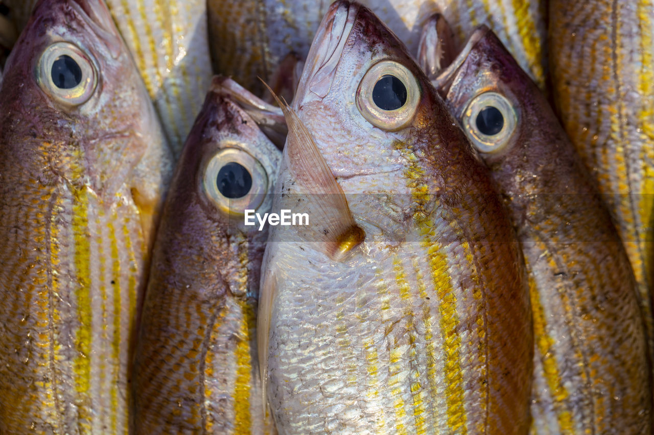 animal, vertebrate, close-up, fish, food and drink, food, no people, seafood, retail, market, animal themes, for sale, freshness, day, group of animals, animal body part, outdoors, wellbeing, extreme close-up, raw food, animal head, animal eye