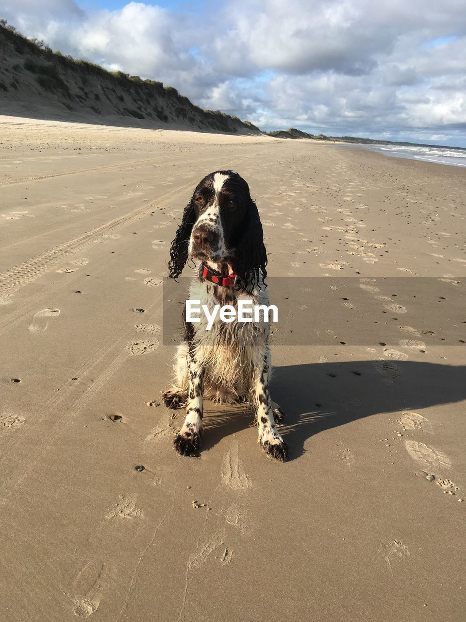 one animal, canine, dog, pets, domestic animals, domestic, mammal, animal, animal themes, land, sand, beach, cloud - sky, vertebrate, sky, nature, sunlight, sea, shadow, day, no people, outdoors, mouth open
