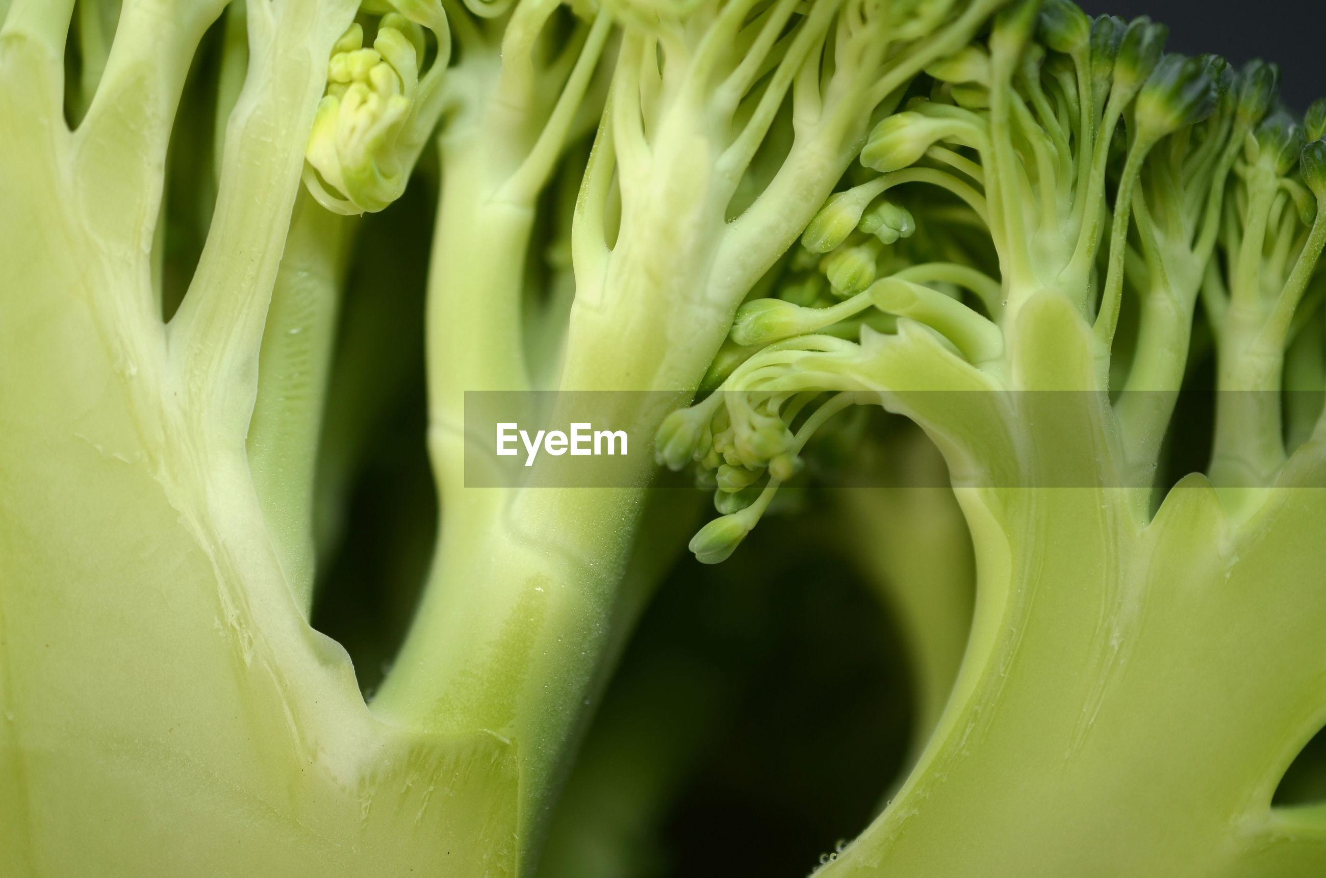 Cross section of broccoli vegetable on close macro shot