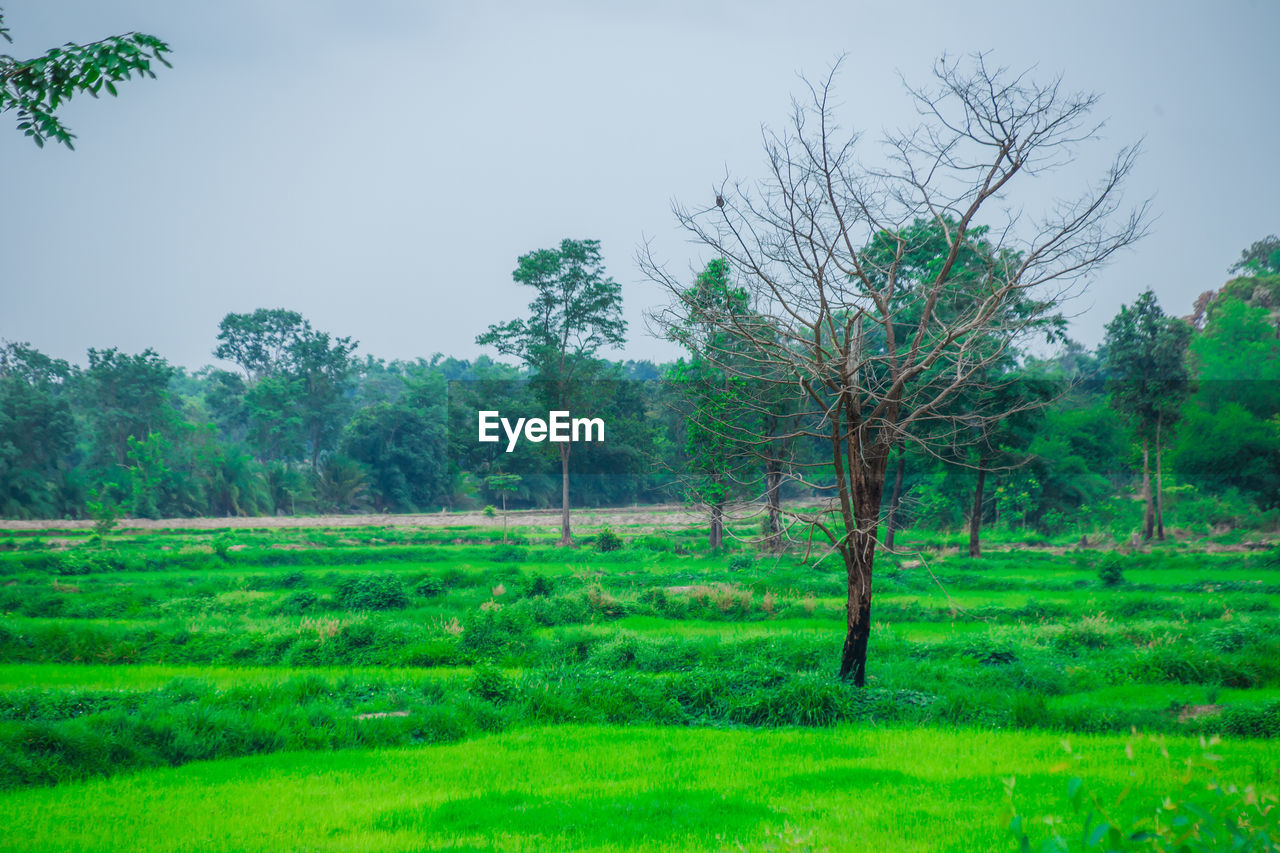 tree, plant, land, landscape, green color, sky, tranquility, field, environment, nature, beauty in nature, tranquil scene, grass, no people, non-urban scene, growth, scenics - nature, day, outdoors, solitude