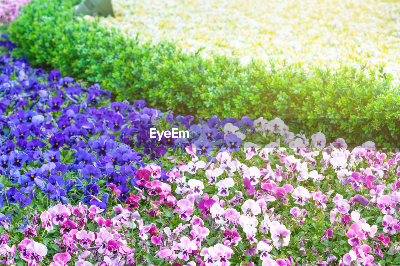 flower, flowering plant, plant, beauty in nature, freshness, nature, pink color, flowerbed, growth, multi colored, ornamental garden, springtime, garden, no people, close-up, vibrant color, fragility, purple, day, formal garden, outdoors, flower head, gardening, softness