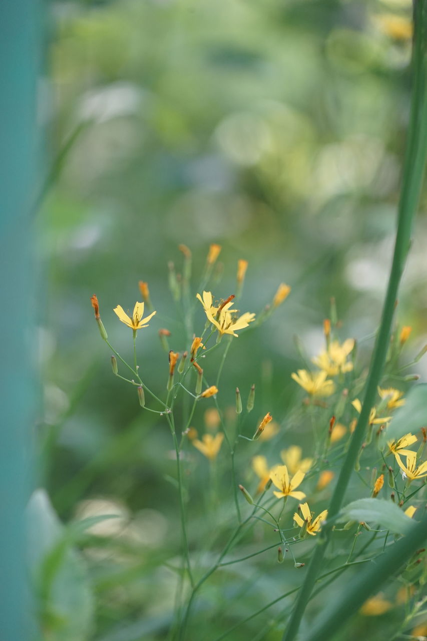 growth, nature, plant, day, outdoors, selective focus, beauty in nature, no people, flower, close-up, freshness, fragility, grass