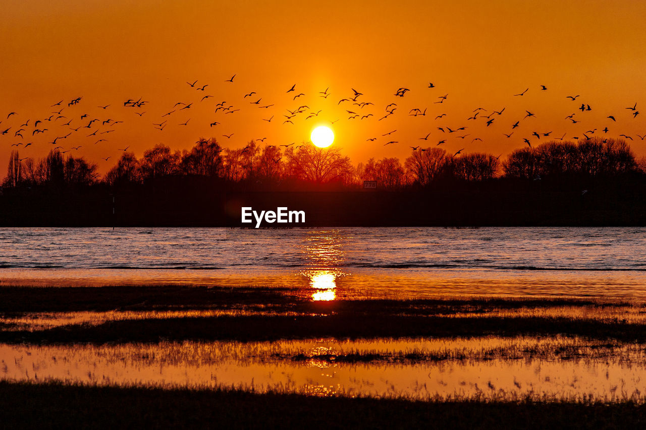 sunset, sky, orange color, animal, bird, animal themes, water, scenics - nature, vertebrate, large group of animals, beauty in nature, animals in the wild, group of animals, animal wildlife, silhouette, sun, tranquil scene, flying, flock of birds, no people, outdoors, horizon over water