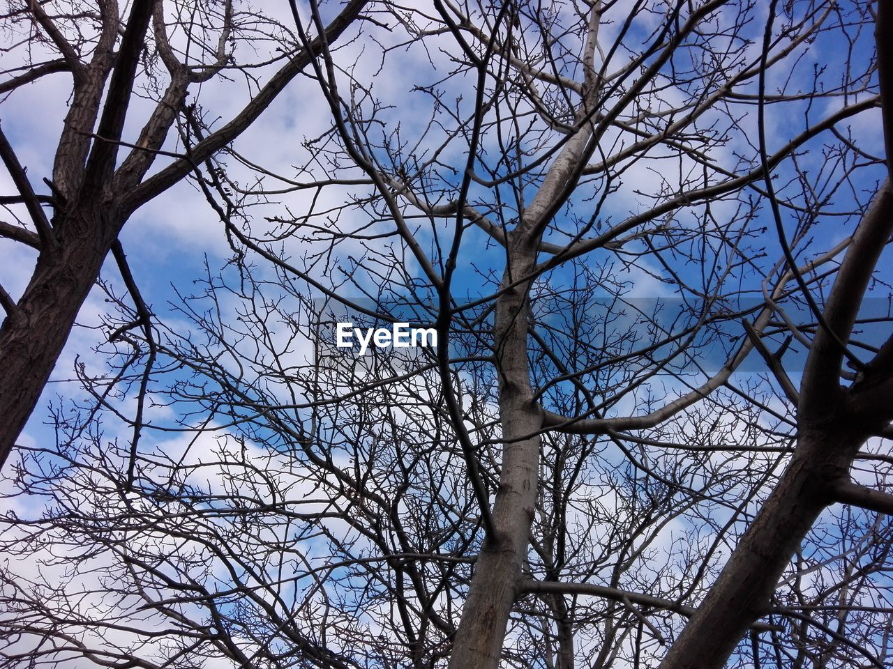 tree, branch, bare tree, low angle view, plant, sky, nature, day, no people, tranquility, trunk, tree trunk, outdoors, beauty in nature, forest, cloud - sky, land, growth, tranquil scene, non-urban scene, tree canopy