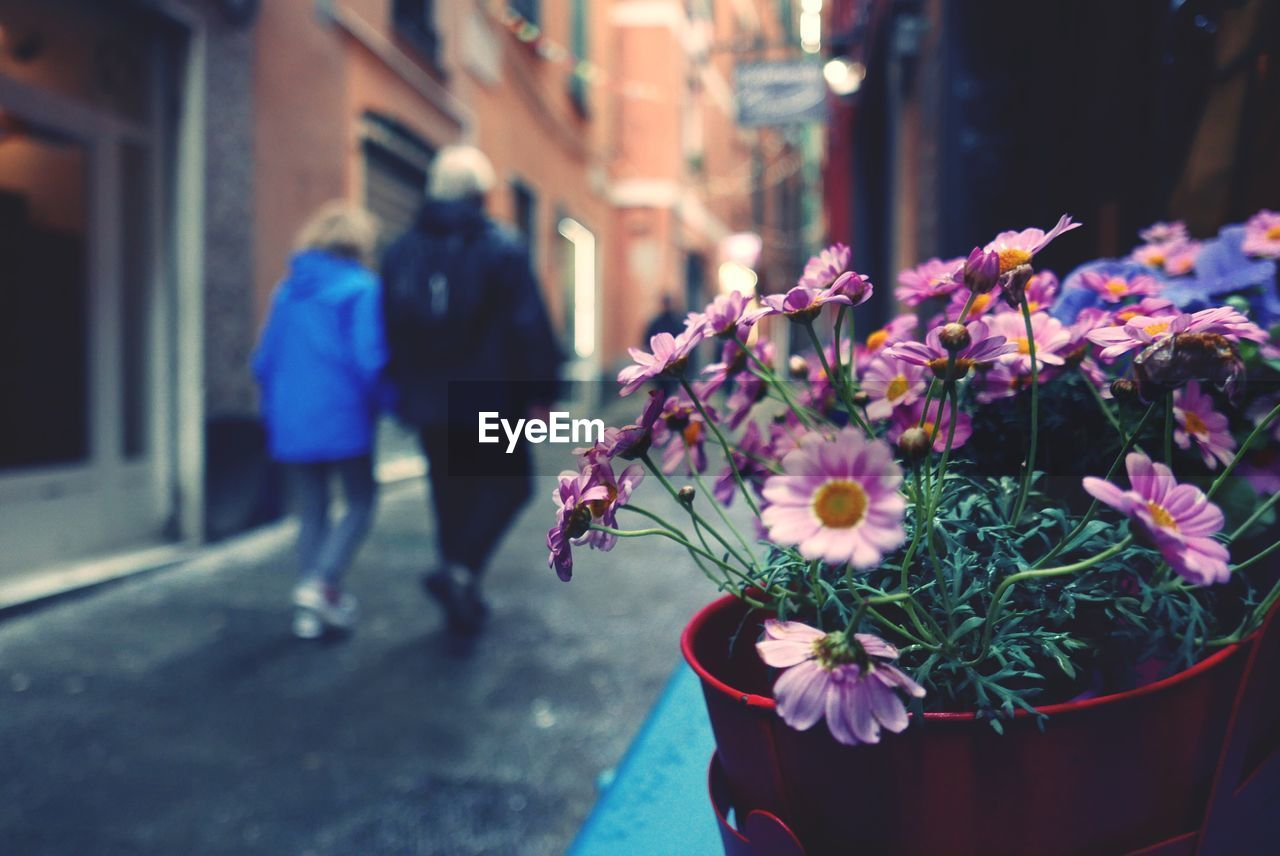 flowering plant, flower, plant, freshness, city, architecture, building exterior, nature, real people, fragility, street, built structure, focus on foreground, day, beauty in nature, vulnerability, incidental people, walking, outdoors, women, purple, flower head, flower arrangement