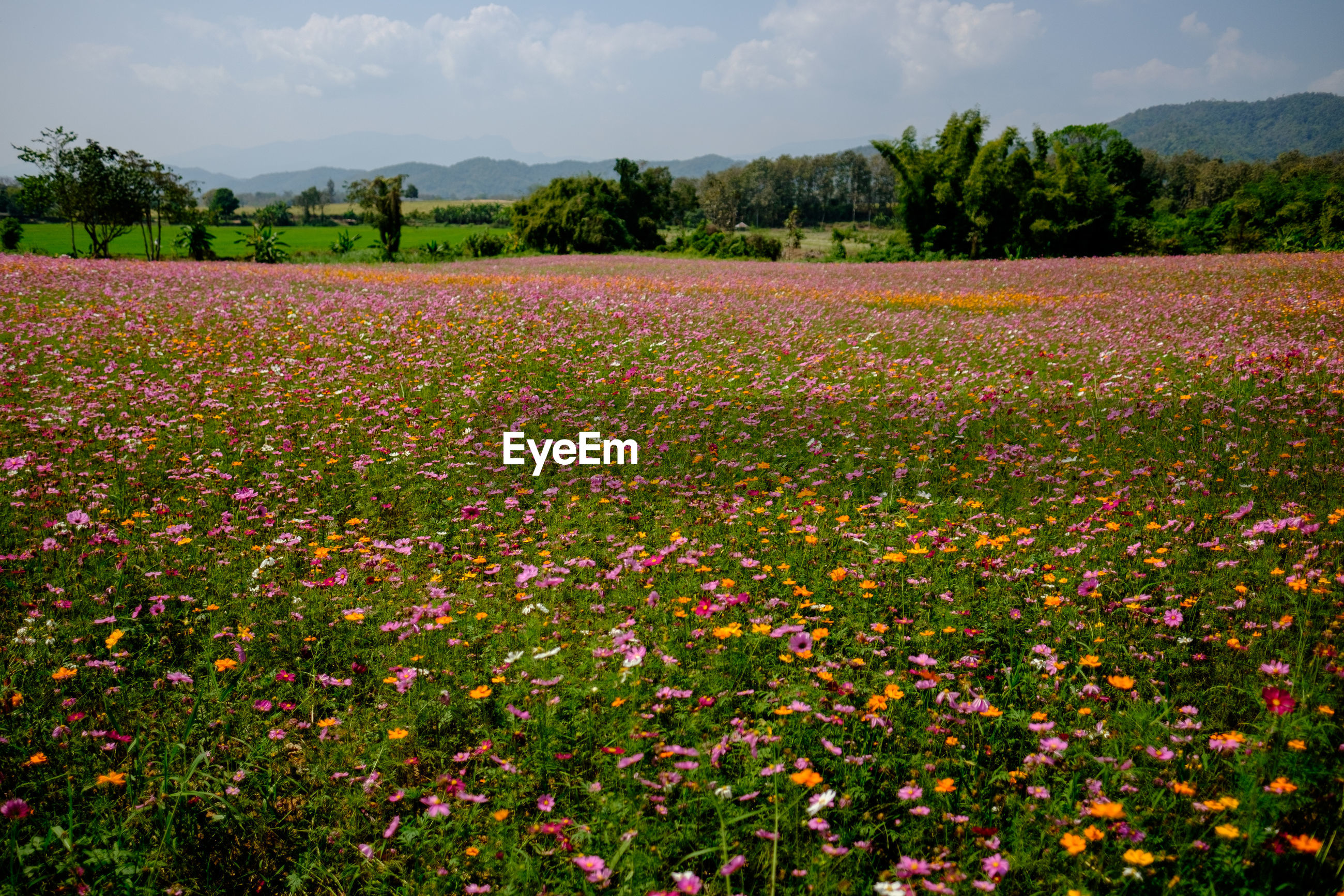SCENIC VIEW OF FLOWERING PLANTS ON LAND