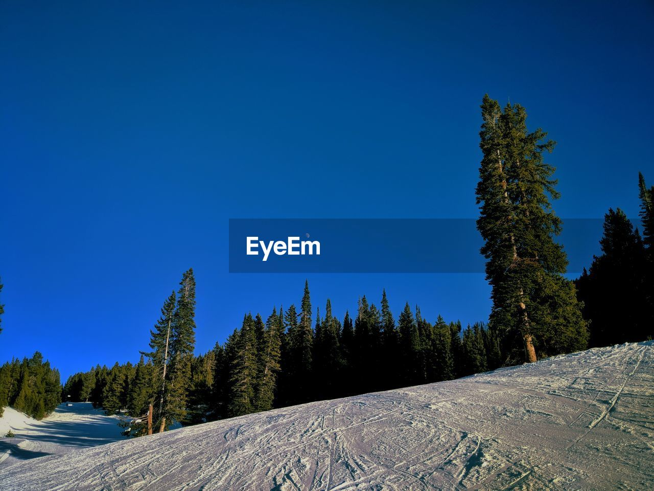 sky, tree, blue, plant, clear sky, scenics - nature, beauty in nature, tranquility, tranquil scene, snow, copy space, non-urban scene, nature, no people, cold temperature, winter, growth, land, environment, mountain, pine tree, coniferous tree, snowcapped mountain