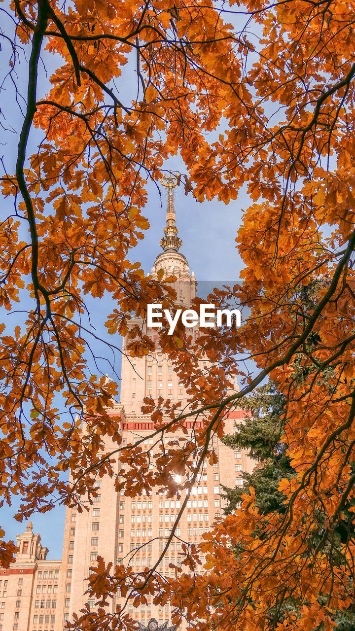 tree, plant, building exterior, autumn, architecture, built structure, branch, building, nature, change, sky, low angle view, day, no people, orange color, growth, outdoors, leaf, tower, city, office building exterior, skyscraper, spire