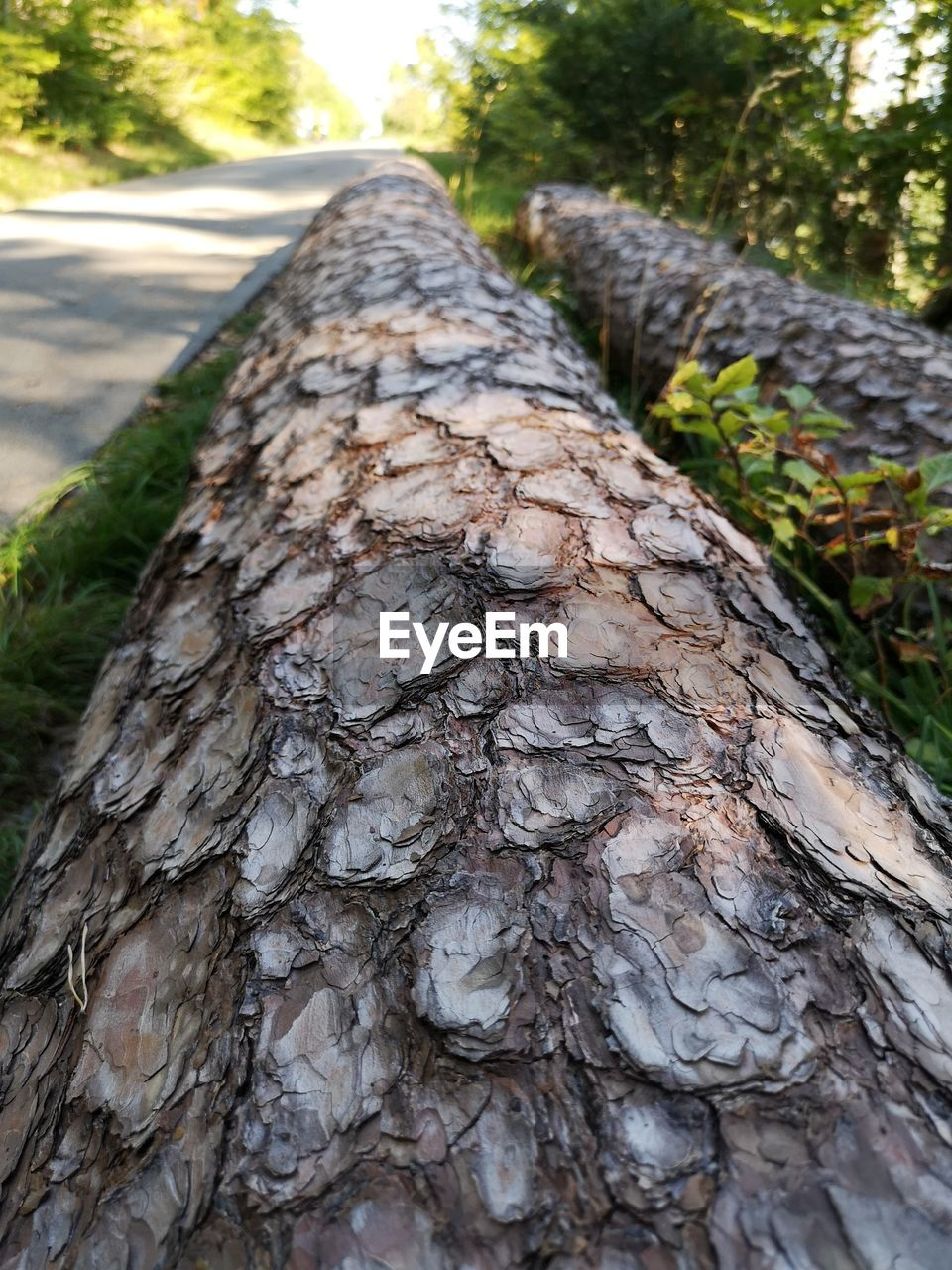 tree, trunk, tree trunk, textured, focus on foreground, plant, close-up, rough, day, no people, wood - material, bark, nature, growth, pattern, natural pattern, selective focus, outdoors, plant bark, forest