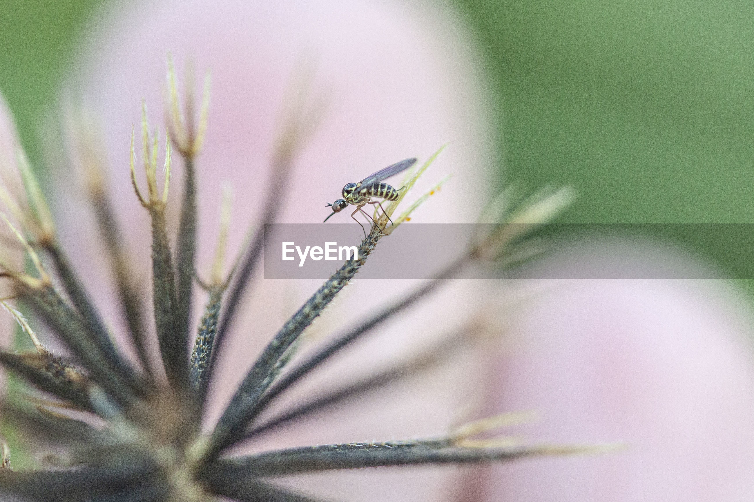 CLOSE-UP OF INSECT ON GREEN FLOWER