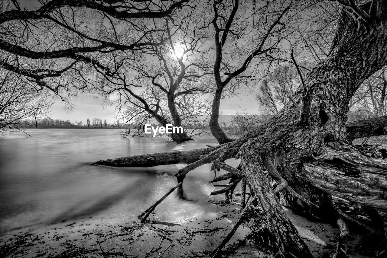 tree, bare tree, water, branch, nature, outdoors, tranquility, beauty in nature, river, winter, scenics, tranquil scene, no people, cold temperature, day, riverbank, nautical vessel, snow, sky, dead tree