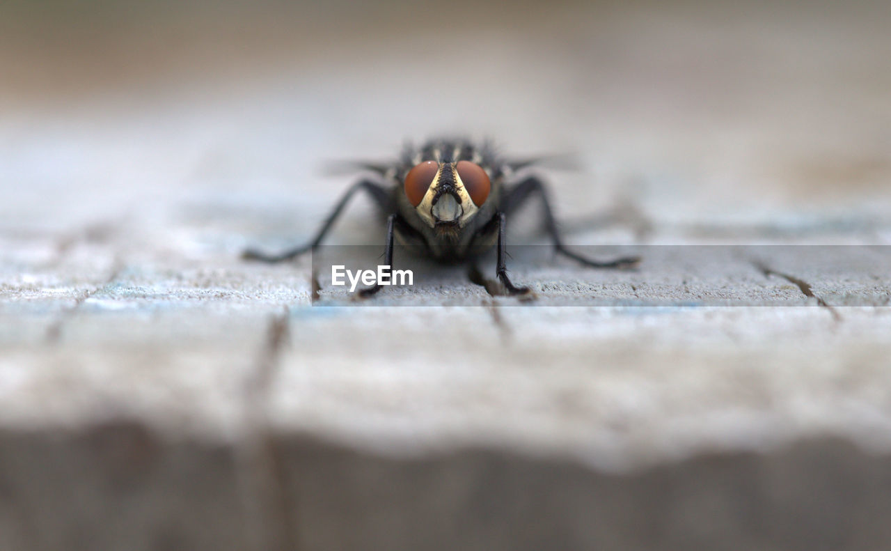 Close-up of fly on wood