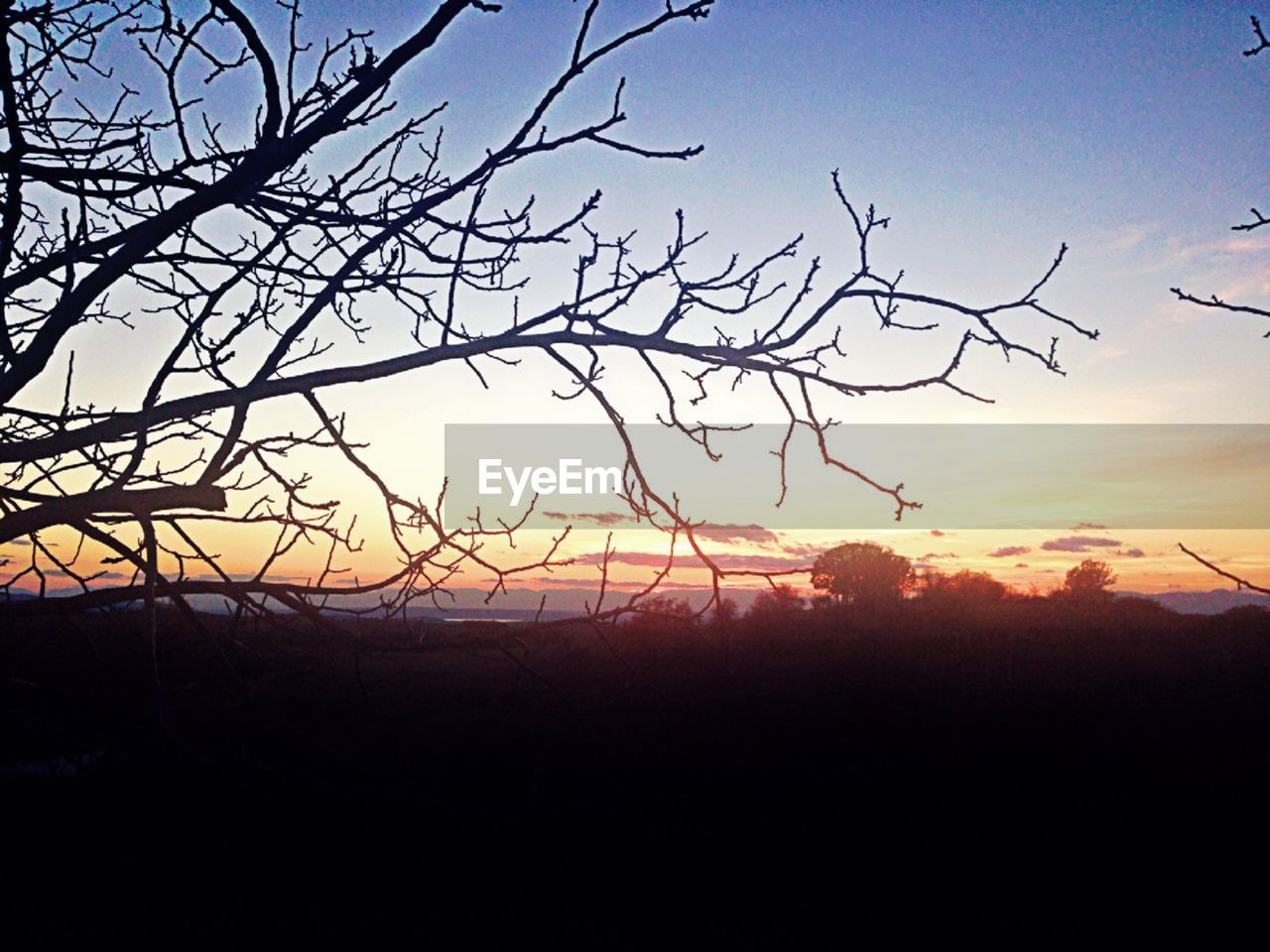 sunset, silhouette, nature, beauty in nature, tree, tranquility, sky, tranquil scene, scenics, landscape, no people, outdoors, bare tree, branch, day