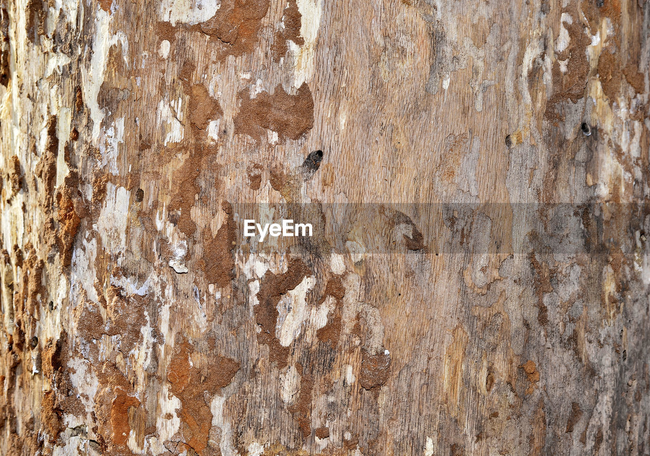 textured, backgrounds, full frame, close-up, pattern, rough, weathered, no people, brown, wood - material, old, tree trunk, damaged, tree, wood, wall - building feature, day, trunk, bad condition, extreme close-up, wood grain, abstract, textured effect, abstract backgrounds