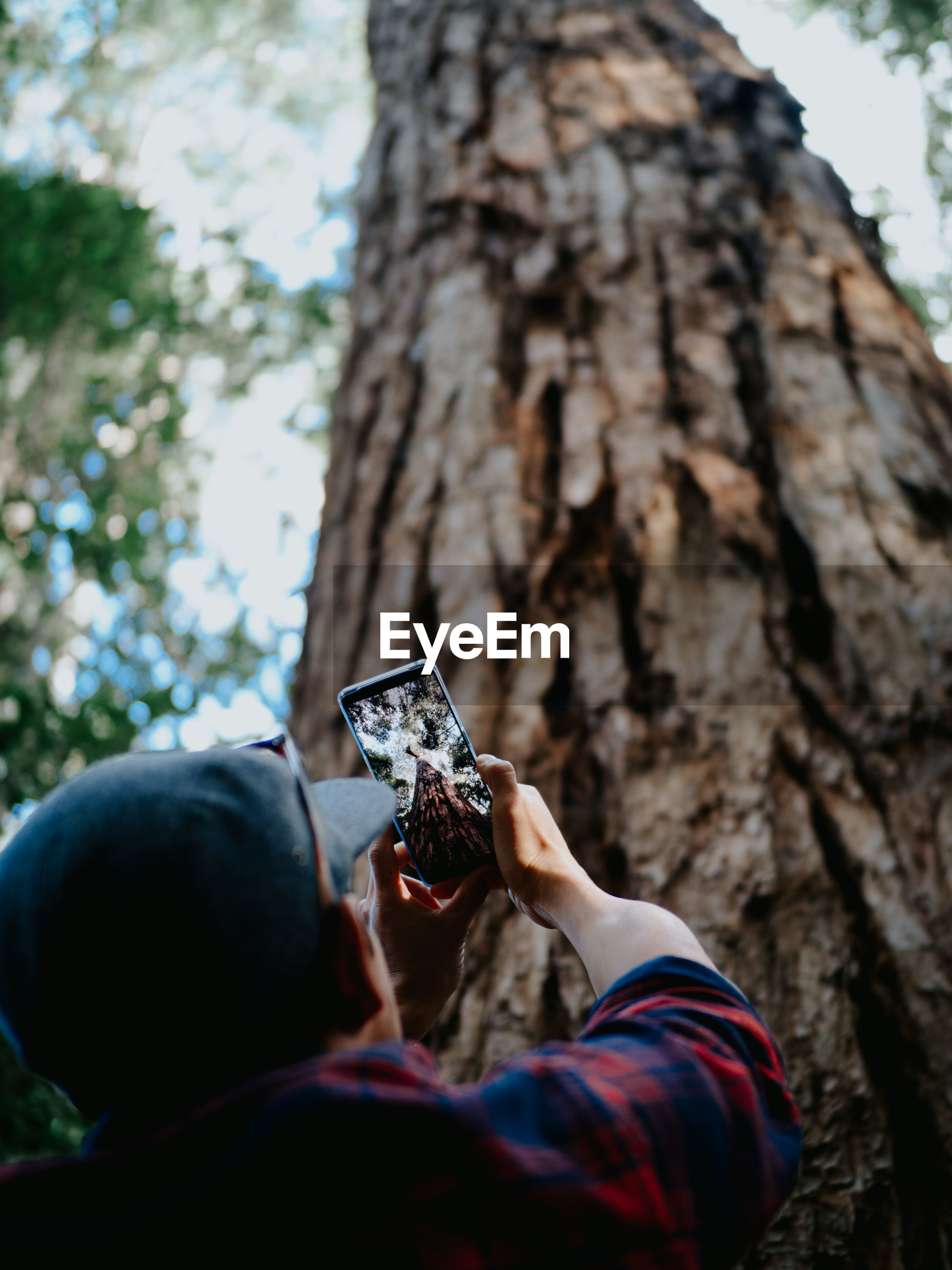 LOW ANGLE VIEW OF MAN PHOTOGRAPHING AGAINST TREES