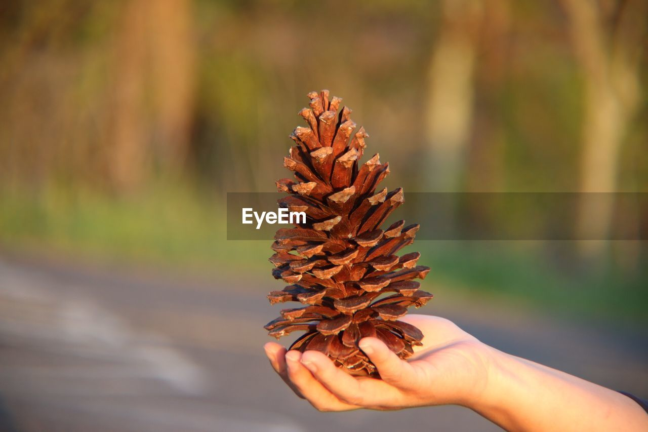 human hand, hand, one person, human body part, holding, focus on foreground, day, real people, nature, close-up, pine cone, lifestyles, outdoors, unrecognizable person, body part, leisure activity, plant, finger, sunlight, beauty in nature, change, human limb, coniferous tree