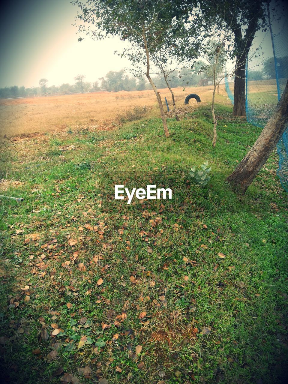 tree, grass, field, nature, growth, landscape, outdoors, beauty in nature, day, tranquility, scenics, no people, sky, mammal