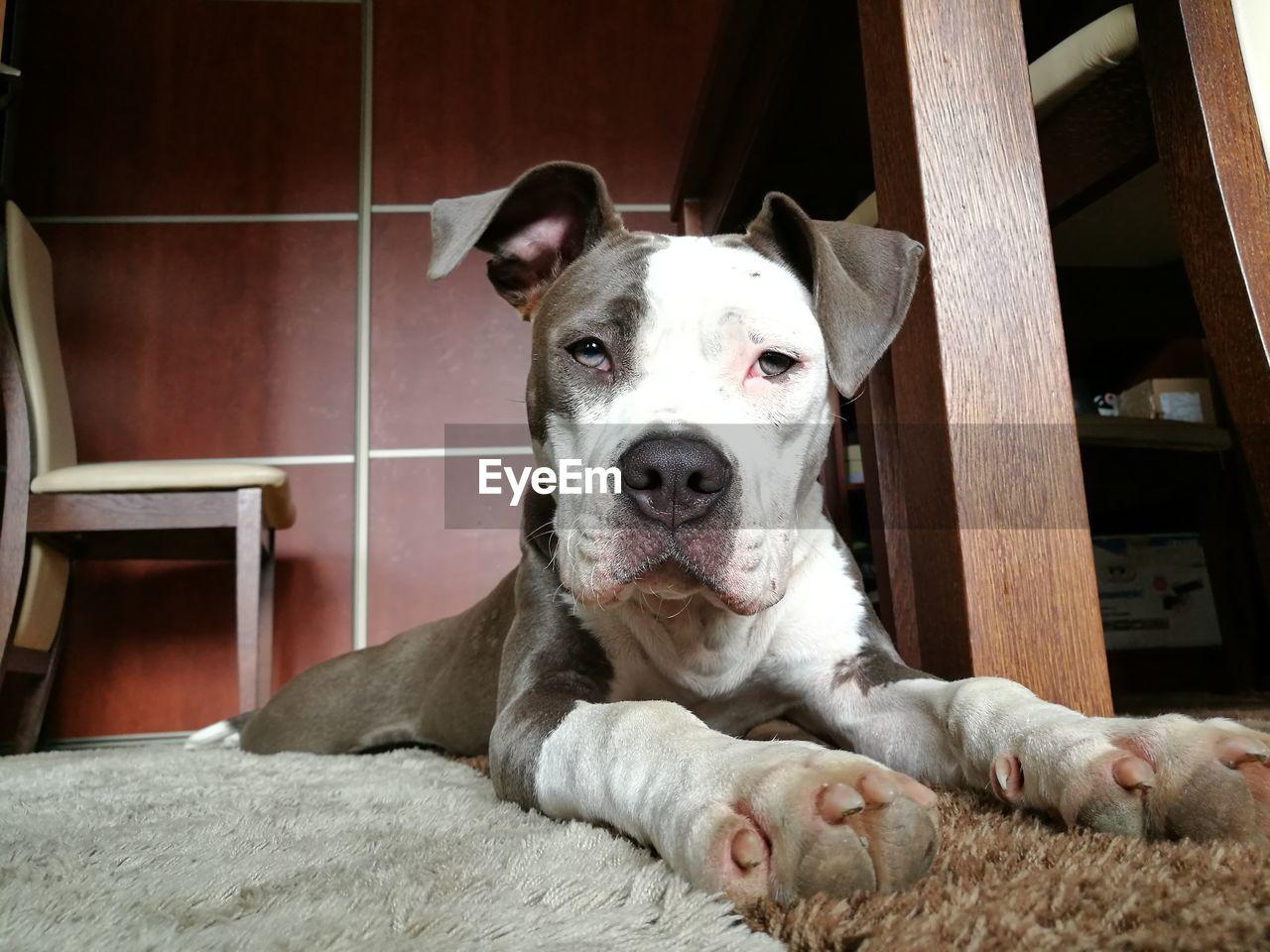 Portrait of dog