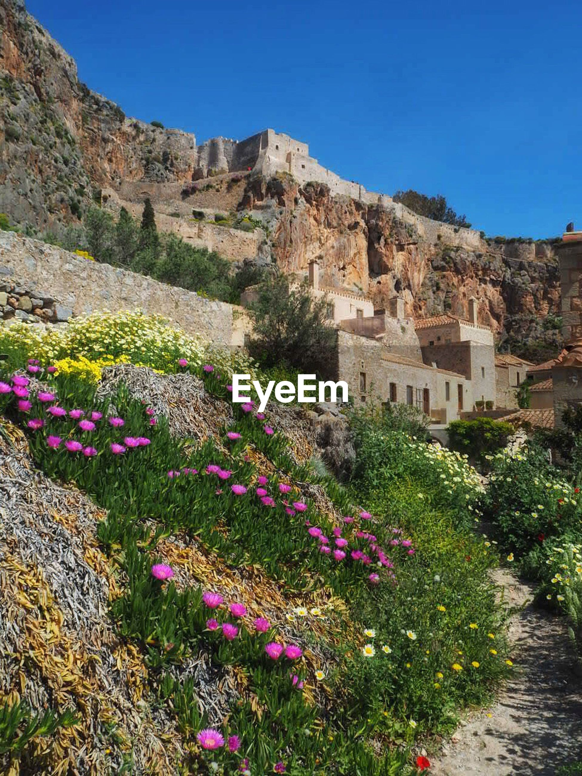 FLOWERS GROWING IN MOUNTAINS