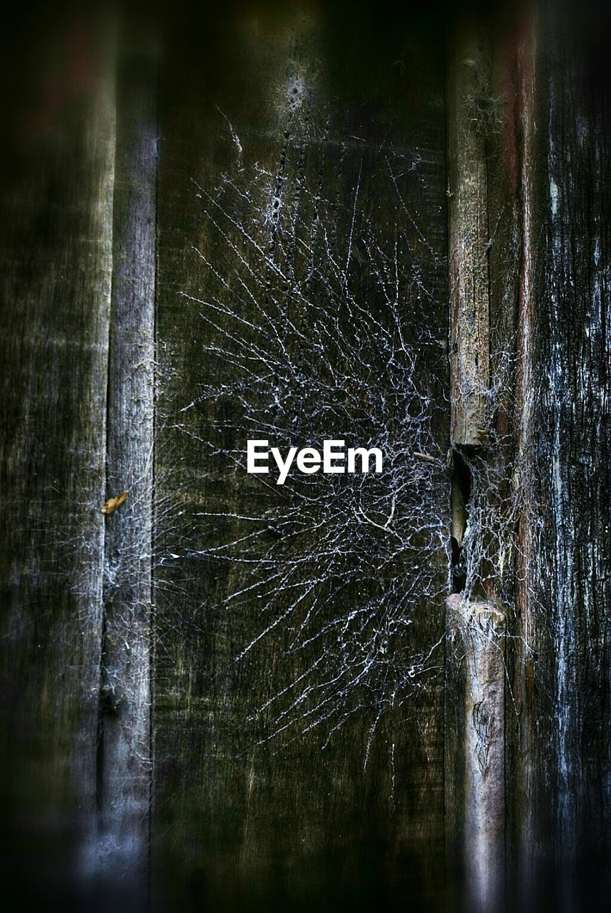 no people, wood - material, outdoors, night, bare tree, close-up, nature