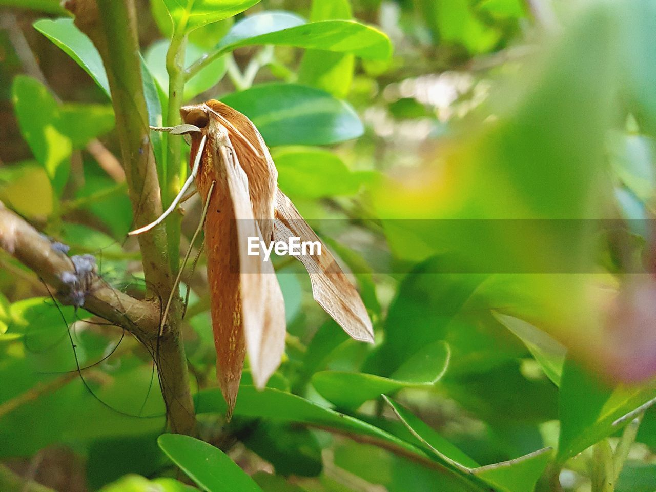 plant, growth, leaf, plant part, close-up, no people, nature, green color, day, selective focus, beauty in nature, focus on foreground, vulnerability, plant stem, tranquility, tree, freshness, outdoors, food, fragility