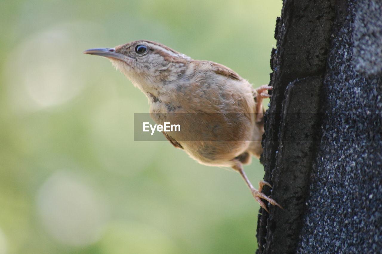 Directly Below Shot Of Bird Perching On Retaining Wall