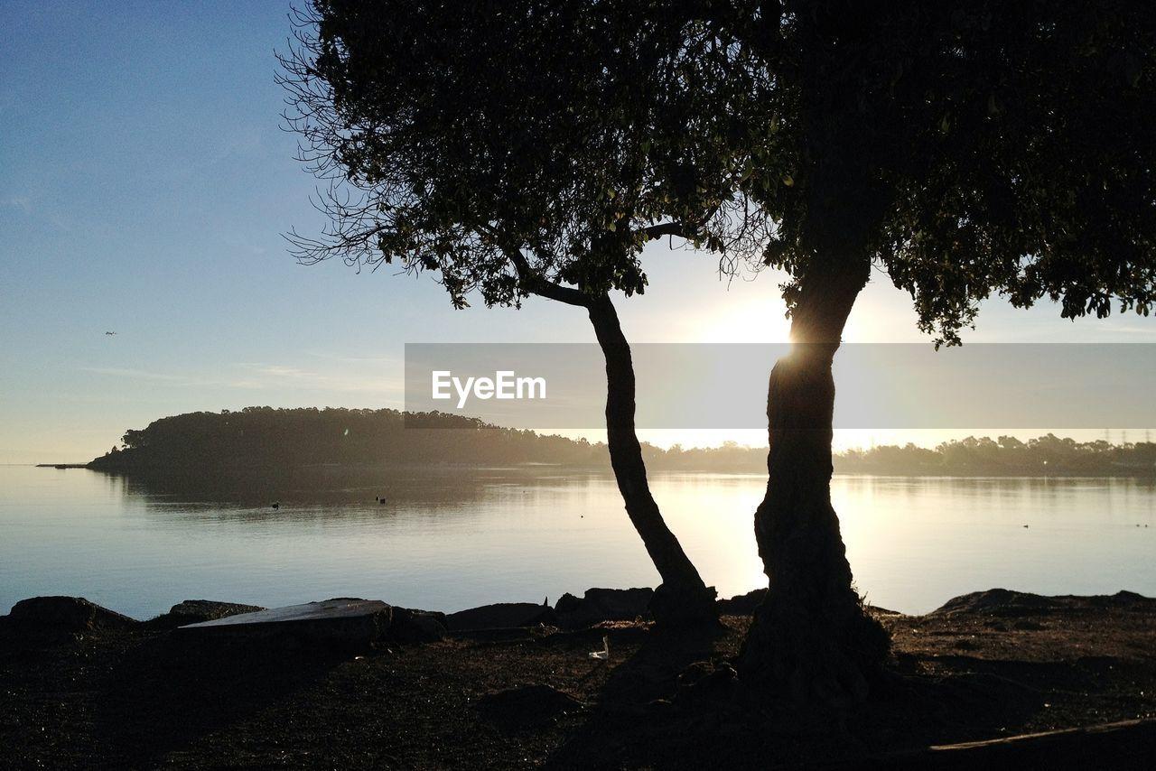 Silhouette on tree at seaside
