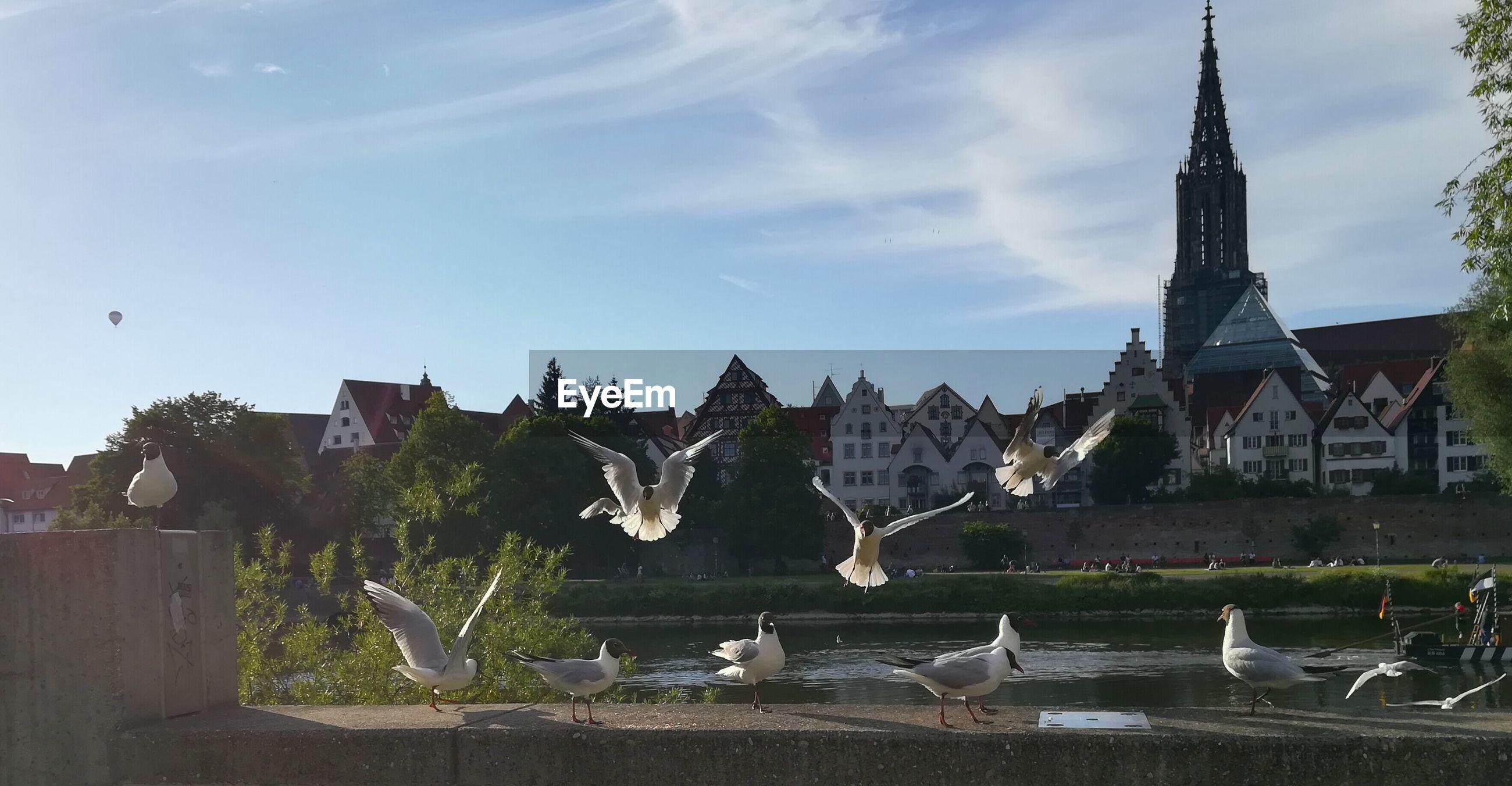 BIRDS FLYING OVER WATER IN CITY