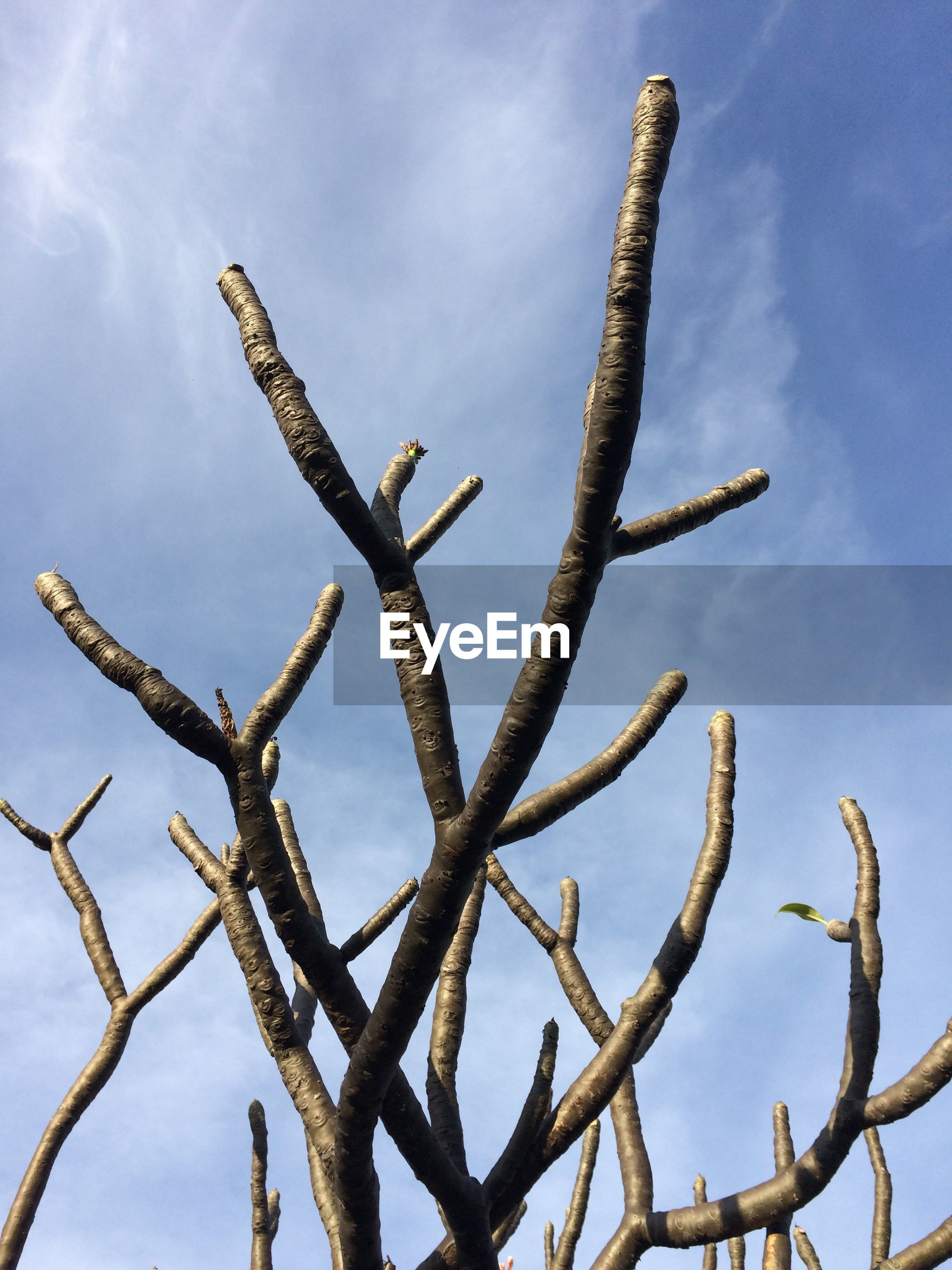 Low angle view of branches against sky