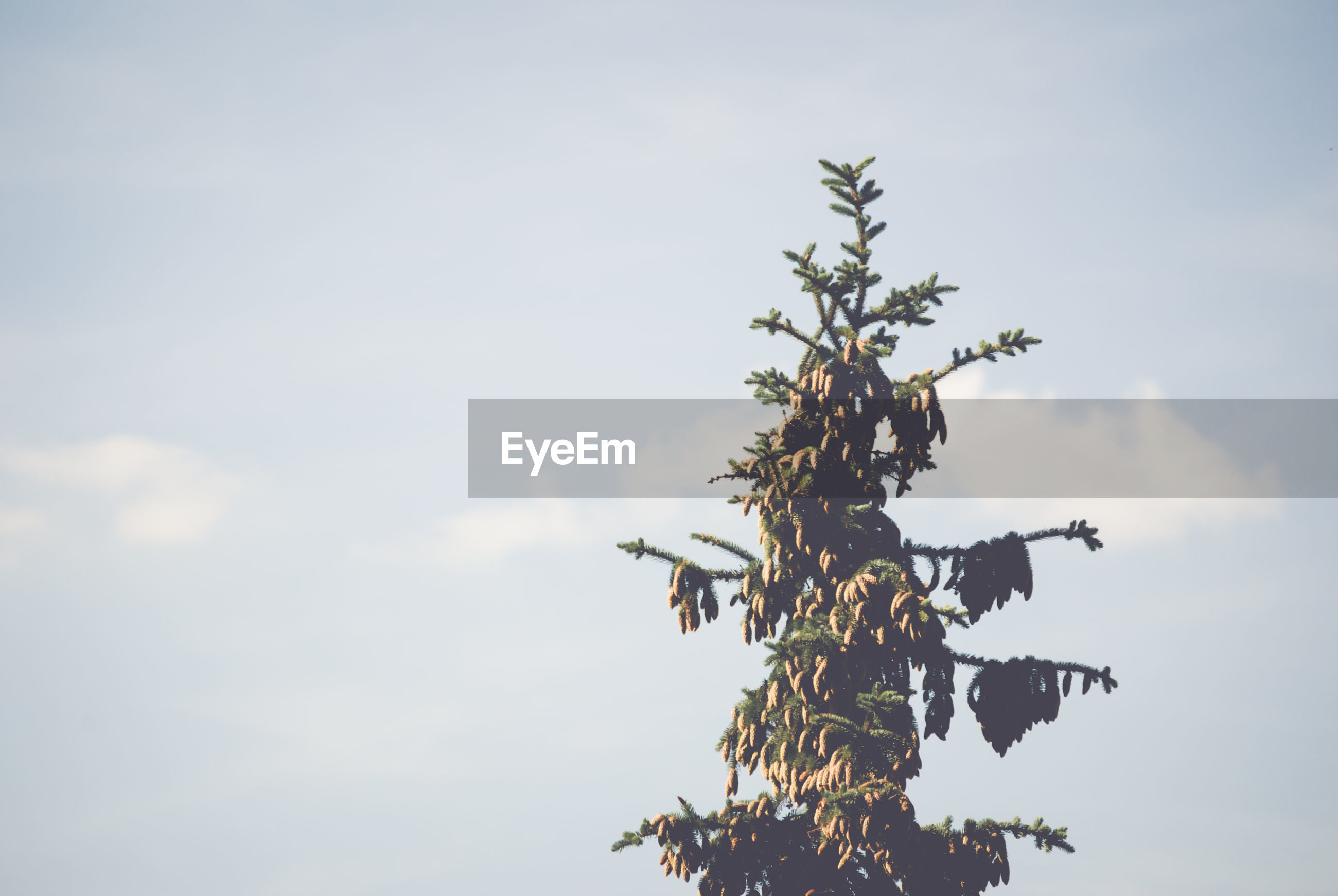 Low angle view of tree against cloudy sky on sunny day