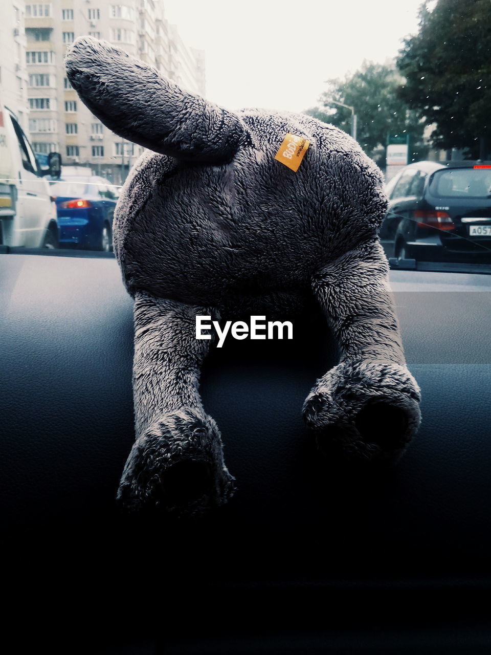 EyeEm Selects Car Close-up Leopard Vehicle Big Cat Krüger National Park  Undomesticated Cat Animal Markings Cat Family Side-view Mirror Bus Spotted Rainy Season Land Vehicle Clown Stuffed Toy Parking Windshield Toy Animal