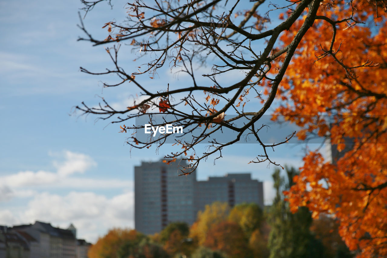 Trees and buildings against sky during autumn