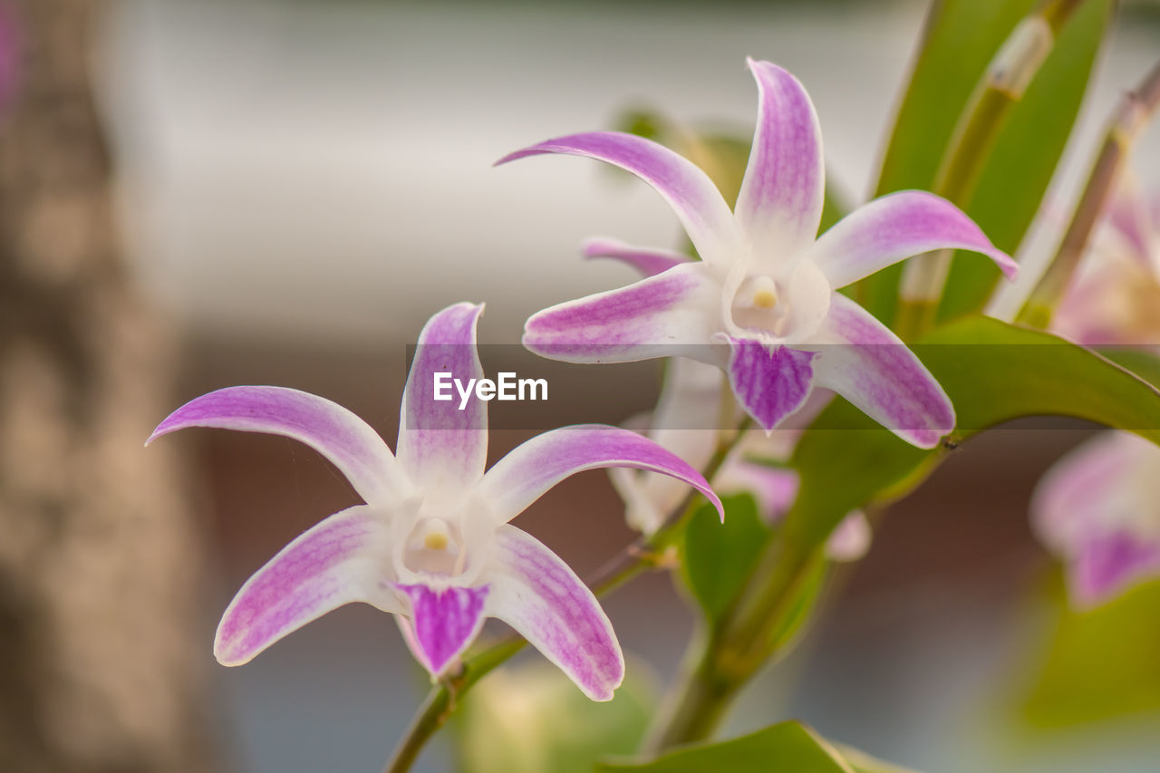 flowering plant, flower, plant, petal, vulnerability, beauty in nature, fragility, close-up, freshness, flower head, inflorescence, growth, focus on foreground, nature, purple, no people, orchid, selective focus, day, outdoors, pollen