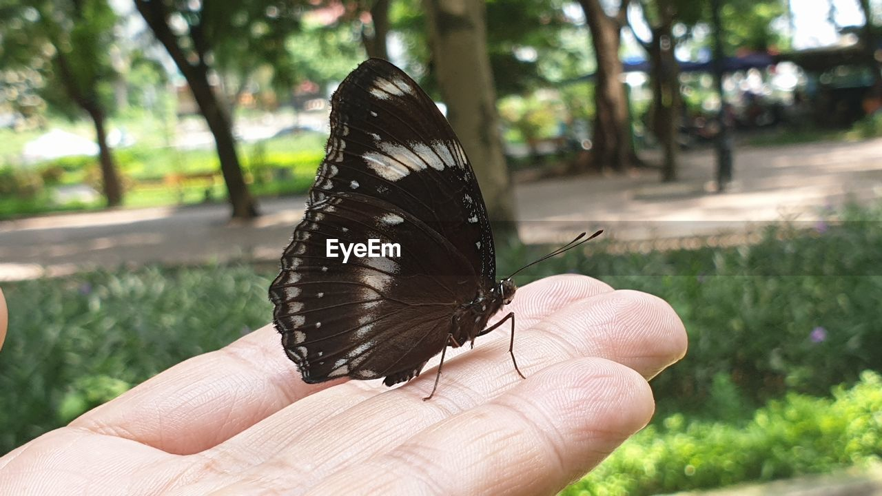 human hand, human body part, hand, one animal, animal themes, animal, animal wildlife, one person, animals in the wild, real people, invertebrate, focus on foreground, insect, butterfly - insect, animal wing, holding, day, unrecognizable person, body part, black color, finger, outdoors, butterfly