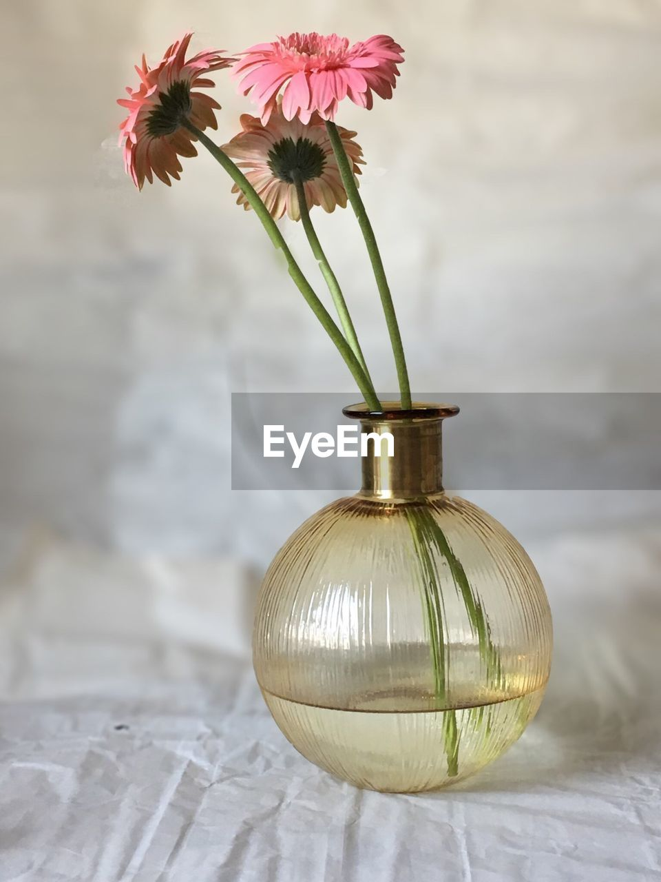 flower, vase, petal, flower head, fragility, beauty in nature, freshness, focus on foreground, no people, close-up, indoors, day, nature