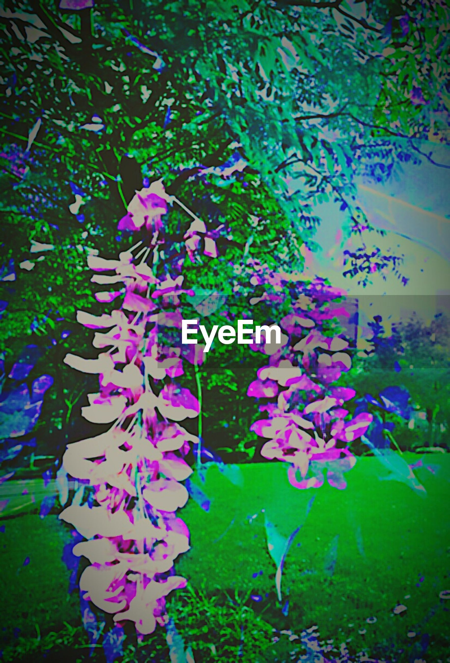 flower, growth, freshness, leaf, fragility, petal, beauty in nature, plant, blooming, nature, purple, pink color, green color, high angle view, park - man made space, flower head, in bloom, day, outdoors, no people