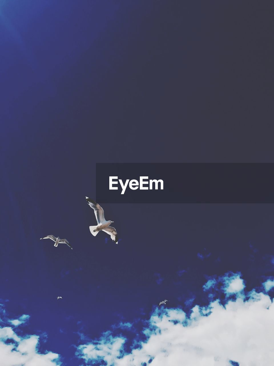 animal wildlife, animals in the wild, animal themes, animal, vertebrate, flying, bird, sky, low angle view, nature, spread wings, mid-air, no people, cloud - sky, blue, one animal, copy space, seagull, day, marine