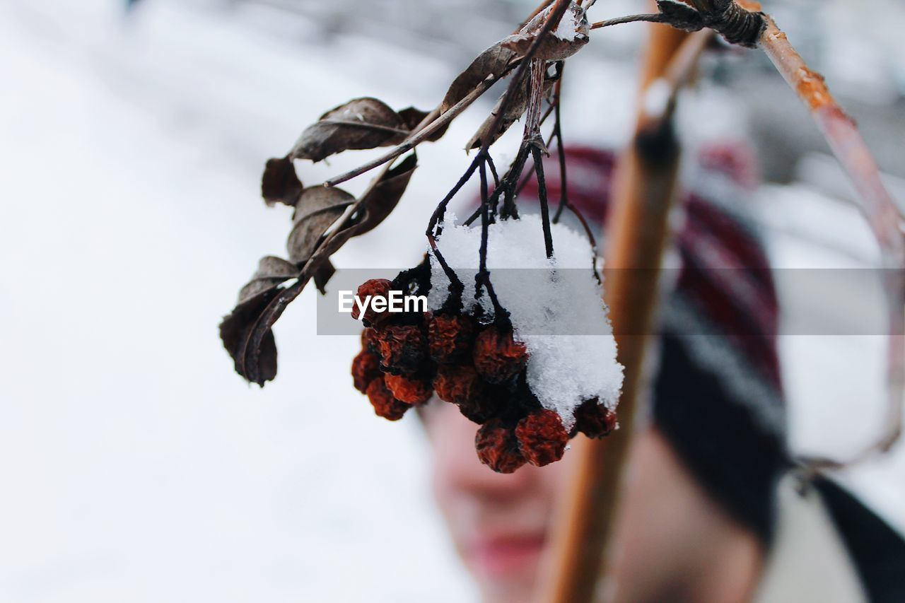 hanging, close-up, outdoors, nature, day, no people, winter